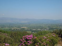 View of Clogheen and Galtees from Knockshanahullion during Rhododendron blooming season. Tipperary Ireland, My Ancestors, Masons, Time Of The Year, My Dream, Bloom, Walking, River, Spaces