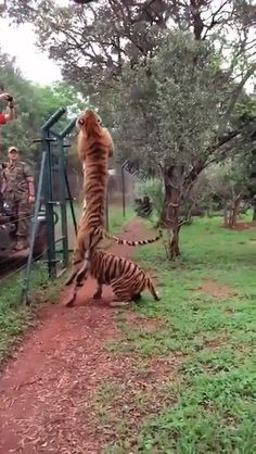 his top is made of rubber, his bottom is made of springs – Lille Stahl - Baby Animals Funny Animal Videos, Cute Funny Animals, Cute Baby Animals, Cute Cats, Nature Animals, Animals And Pets, Wildlife Nature, Wild Animals Videos, Beautiful Creatures