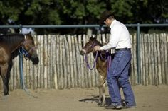 Foal Training Success Tips   Horse Digest