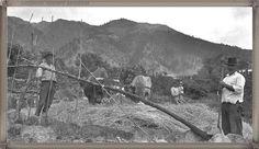La Palma - El Paso trillando año 1950.... #canariasantigua #blancoynegro #fotosdelpasado #fotosdelrecuerdo #recuerdosdelpasado #fotosdecanariasantigua #islascanarias #hikingtenerife #tenerifesenderos