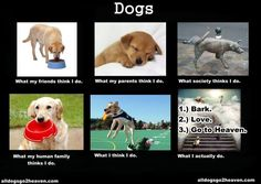 Dogs :)
