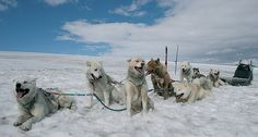 Dog sledding is a lot of fun and a real treat for anyone with adventure in their blood.