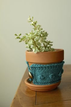 knit plant, potted plants, plant pots, plant cozi, yarn