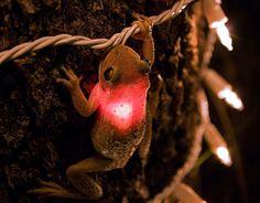 Frog eating Fairy Lights...