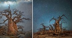 In this new series of striking images, San Francisco-based photographer Beth Moon (previously) captures some of the world's oldest living trees against shimmering night skies in remote areas of Botswana, Namibia and South Africa. Titled Diamond Nights, the new photos were inspired in part by Moon's