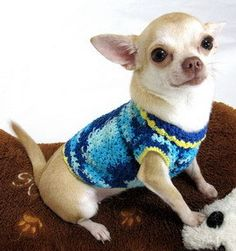 Dog Clothing Chihuahua Pets Blue Clothes / Pet Apparel by myknitt, $25.00