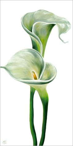 Double CallaLily Limited Edition Giclee This is a limited edition poster of a small edition of only Lily Painting, Fabric Painting, Watercolor Flowers, Watercolor Paintings, Calla Lillies, Color Pencil Art, Arte Floral, Tropical Flowers, Flower Art