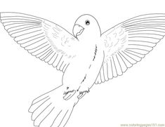 parrot coloring pages printable   free printable coloring page Parrot (Birds > Parrots)