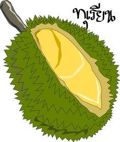 Durian,Thai King Fruit