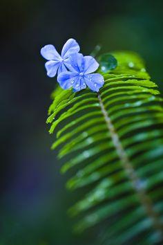 Las flores son tan delicadas, tan fràgiles, y a veces tan efimera , pero su belleza y su valor,  no se compra con nada, asi es la vida, por eso debemos aprovechar los buenos momentos, a las personas que tenemos y no malbaratar el tiempo...
