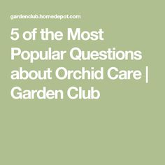 5 of the Most Popular Questions about Orchid Care   Garden Club