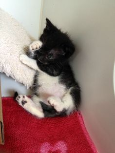 This bashful sweetie. | 39 Overly Adorable Kittens To Brighten Your Day
