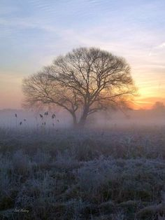 A romantic Sunrise today Photo by Harald Gaertner -- National Geographic Your Shot