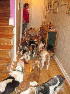 House of Puddles is non-profit in Maryland that takes in senior bassets when no one else will take care of them. God love them for that