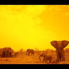 #sunset #elephant #photography #wildlife