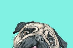 Custom Dog Art hand painted in gouache- a great way to immortalize your furry best friend! I lovingly hand drawn and paint custom pet portraits using Custom Dog Portraits, Pet Portraits, Portrait Art, Pugs, Pug Wallpaper, Pug Art, Pug Love, Animal Paintings, Clipart