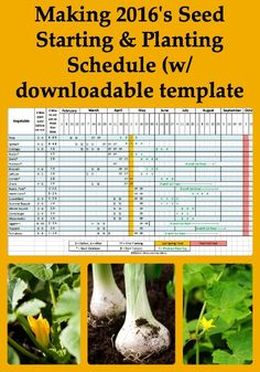 It's time for making 2016's seed starting & planting schedule so I've updated our annual schedule again and attached it as a downloadable template.
