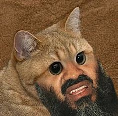 19 best cat beards and moustaches images on pinterest moustache