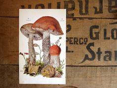 German Mushroom Print Fungus Identification by amykristineprints, $10.00
