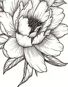 Peony Flower Art PRINT of Pen Illustration Flower Drawing Floral Tattoo Botanical Line Drawing Feminine Art Peony Tattoo Wall Decor Drawing Art Botanical Decor drawing Drawing flowers feminine Floral flower illustration line pen peony Print Tattoo Wall Peony Drawing, Flower Art Drawing, Botanical Line Drawing, Flower Sketches, Floral Drawing, Flower Drawings, Drawing Ideas, Drawing Drawing, Mandala Drawing