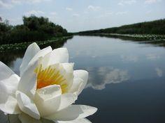 Delta Dunarii (Danube Delta); Romania.