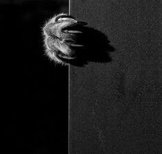 Imagens em preto e branco revelam a vida misteriosa dos gatos | Estilo