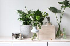 Plywood & white & green