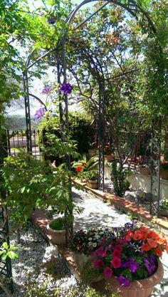 My garden