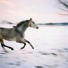 There are fewer beautiful thing than a horse at a full gallop! photographer dietmar busse