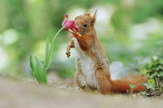 Squirrel & Tulip by Julian Rad