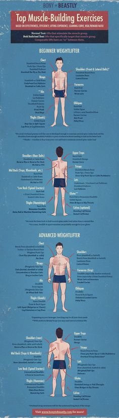 Top Muscle Building Exercises Infographic