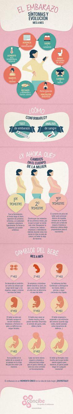 Síntomas y evolución del embarazo mes a mes.