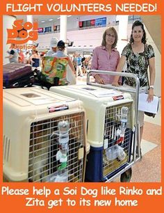ARE YOU FLYING BACK FROM THAILAND TO: USA, CANADA, or EUROPE? If YES - we NEED YOU, as you can help a Soi Dog get to its new home! Please consider being a flight volunteer, as it costs you nothing on top of your booked flights and you too can do a good deed - just like the wonderful ladies in the photo who took Rinko and Zita on their flight back to Houston. Please contact jan@soidog-foundation.org for more information.