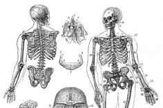 For those seeking a beverage to boost healthy bone minerals, consider making a tea from these five herbs. Bone Health, Health Diet, Health Foods, Calcium Rich Foods, Acidic Foods, Strong Bones, Plant Based Milk