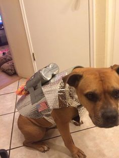 Enjoy turning your pooch into a space adventurer Animal Costumes, Dog Costumes, Costume Ideas, Chrome Spray Paint, Astronaut Costume, Dog Vest, Dog Sweaters, Old Dogs, Dog Love