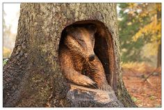 badger carved in tree