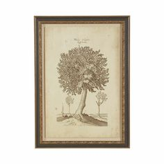 The sketch has the authentic appeal of an aged botanical. In a solid wood shadow box frame, our gicl