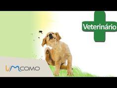 Como Acabar com Pulgas de Cachorro | Remédios Caseiros - YouTube Labrador Retriever, Dogs, Youtube, Home Remedies, Diy Dog, Animals, Nature, Fleas, Labrador Retrievers