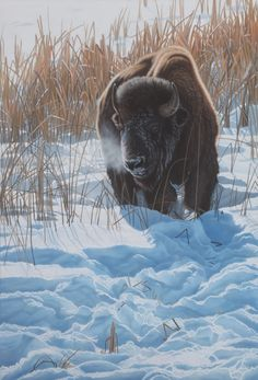 (yet to be named) by Clinton Jammer, Canadian wildlife artist
