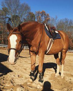 Looks like my horse Buckshot