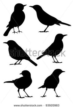 Birds Silhouette - 6 different vector illustrations - stock vector
