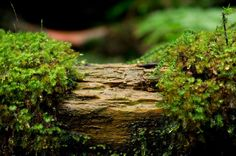 AQ*44 on Tumblr. Aquatic plants archive. Sharing inspirations, aquatic plants, tank progress & -planning, settings, knowledge & equipment. Admin: *A44.   This picture is from Yakushima ancient forest.