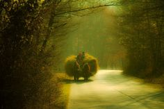 Beauty and old Romania Romania, Country Roads, Tours, Painting, Art, Travel, Beauty, Art Background, Viajes