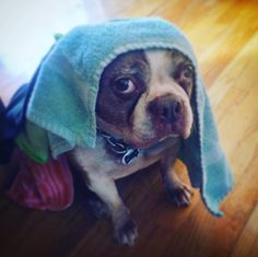 """You're going to Instagram me as a dog nun again? Really?"""