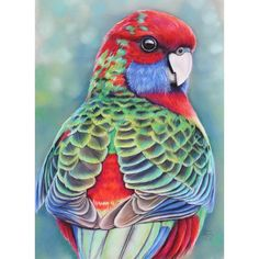 """""""Juvenile Rosella"""" by Artist Joanne Barby PanPastel, pastel and charcoal pencil on Pastemat paper. Copyright-Joanne Barby Instagram @JoanneBarby Facebook: facebook.com/JoBarby"""