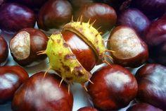 Już jesień - pora na aktywną promocję! - http://taxpr.pl/marketing-promocja/juz-jesien-pora-na-aktywna-promocje-kancelarii/