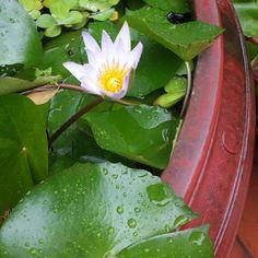 #nofilter #vietnam #hanoi #flowers