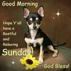 Have a nice peaceful relaxing Sunday. Good Morning Sunday Pictures, Sunday Morning Prayer, Blessed Sunday, Morning Prayers, Good Morning Quotes, Happy Sunday, Australian Expressions, Sunday Greetings, Dog Comics
