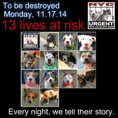 TO BE DESTROYED: 13 Dogs to be euthanized by NYC ACC- MON. 11/17/14. This is a HIGH KILL shelter group. YOU may be the only hope for these pups! ****PLEASE SHARE EVERYWHERE!!To rescue a Death Row Dog, Please read this:  http://urgentpetsondeathrow.org/must-read/  To view the full album, please click here:    https://www.facebook.com/media/set/?set=a.611290788883804.1073741851.152876678058553&type=3