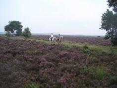 Dwingeloo- Speciaal voor gezinnen met paarden liefhebbers: vakantiepark Het Zonnetij met bungalows, camping en safaritenten. Mooi gelegen aan de rand van het bos en incl mogelijkheid om paard te rijden.